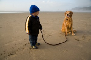 toddler-and-golden-on-leash-at-beach