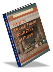house train your dog